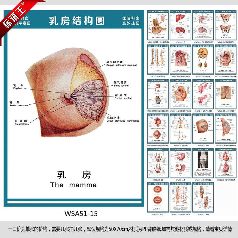 医院科室挂图人体解剖图,构造图乳房结构图宣传画贴画wsa51