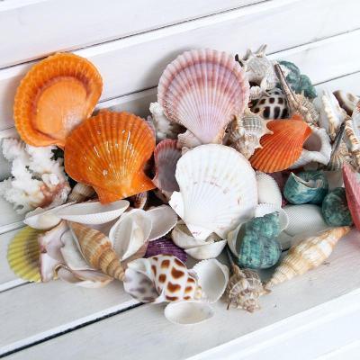 精制时光海之记忆1 天然海螺 五彩贝壳 珊瑚1斤 500克 鱼缸 地台 许愿