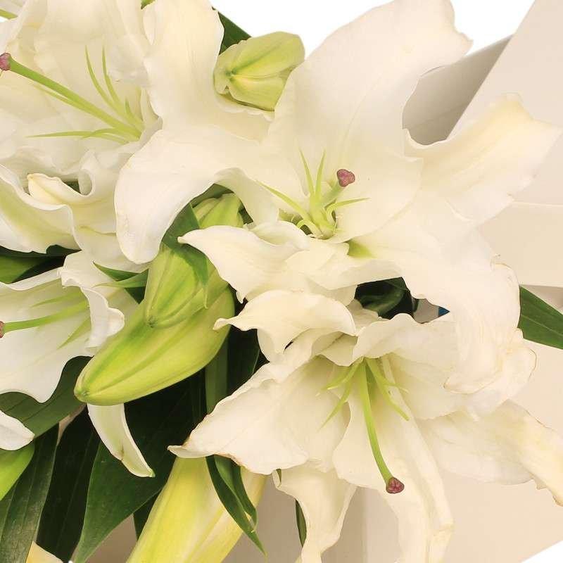 春舞枝鲜花速递盒装智慧百合生日鲜花百合白多头粉鲜花创意天秤座女有百合图片