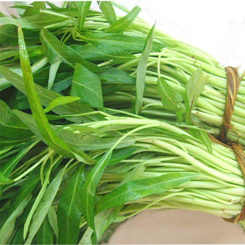 鹏城种业 蔬菜种子 柳叶空心菜种子 阳台种菜 盆栽 雍图片