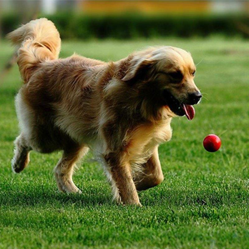 宠物训练球 超耐咬 狗狗玩具 泰迪金毛 小型犬中大型犬实心弹力球图片