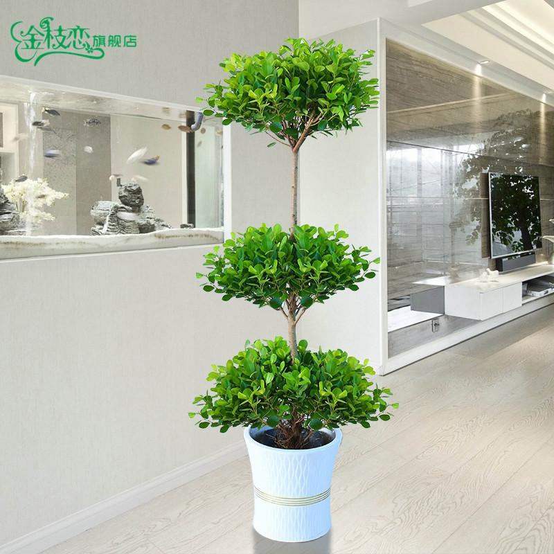大型盆栽植物摇钱树发财树金钱榕客厅办公室绿植招财树开业盆栽