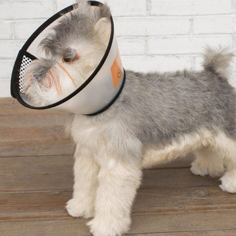 可爱宠物狗狗白色透明白圈狗狗项圈脖圈宠物用品小型犬中型犬颈圈美容