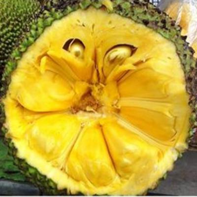走近海南,热带水果吃个够!图片