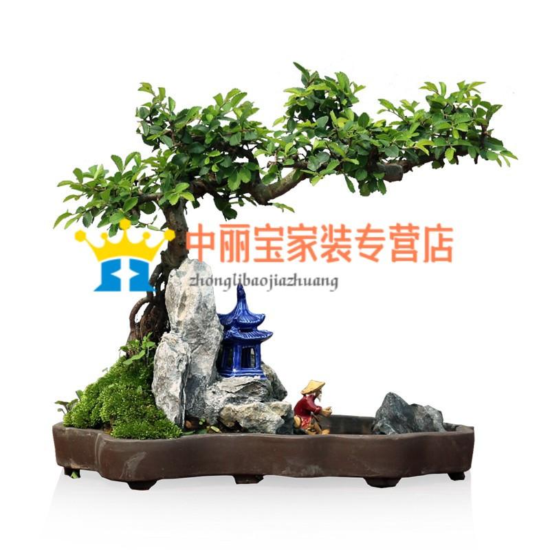 植物榆树造型盆景盆栽室内绿植花卉办公室植物送礼年货礼品