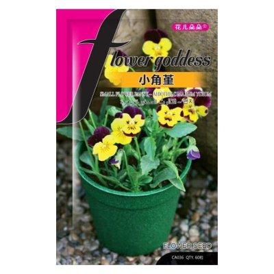 津沽园艺 花卉种子 小角堇花种子 庭院园林植物花卉种子花籽 约60粒